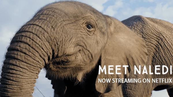 NALEDI - A Baby Elephant's Tale