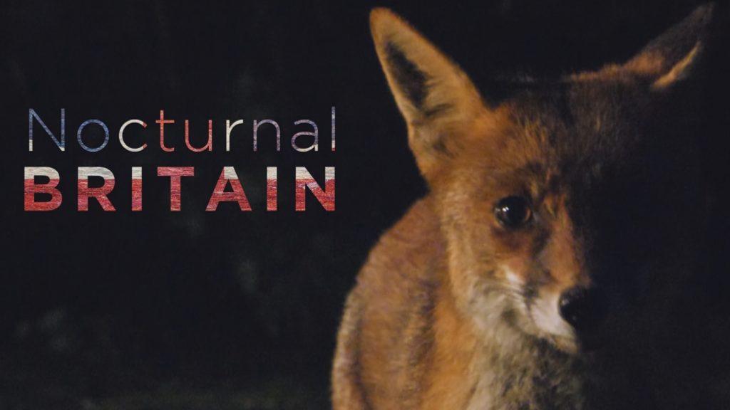 Nocturnal Britain